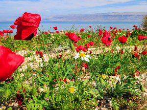 טיול במדבר יהודה וים המלח